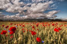 Exuberancia natural by Ruben Fernandez Barragan Beautiful Places, Beautiful Pictures, Poppies, Vineyard, Earth, Heavens, Fungi, Photography, Travel
