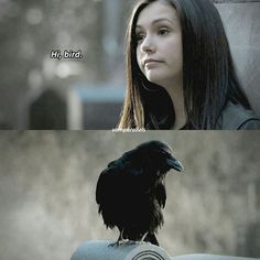 bird aka your future boyfriend