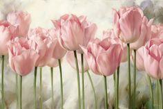 Pink Tulips...allposters.es                                                                                                                                                                                 Más