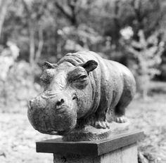Super cute Hippo sculpture at the Umlauf Sculpture Garden in Austin,TX