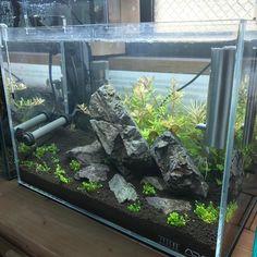 "42 Likes, 1 Comments - MOUSE(Shibachanの進化系) (@mouse_aquarium) on Instagram: ""iPhone7のカメラめっちゃ綺麗(°▽°) #iphone7 #ミニM #水草水槽"""