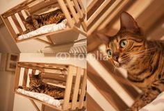 Katze auf Heizung Katze in Ikea Kiste