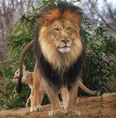 The King pic.twitter.com/oAHVUmdjb1