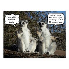 Mannequin Challenged Lemurs Postcard