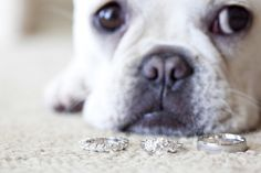 pup and wedding rings.