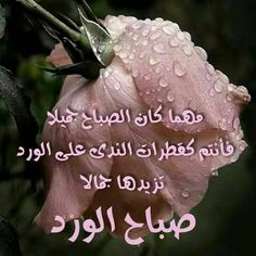 Good Morning Arabic, Good Morning Cards, Good Morning Photos, Good Morning Messages, Alphabet Tattoo Designs, Good Morning Animation, Good Morning Beautiful Quotes, Beautiful Chickens, Morning Greetings Quotes