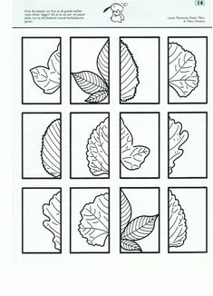 cut and match these leaves great symmetry activity. Black Bedroom Furniture Sets. Home Design Ideas