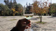 Wine tasting @ Concha y Toro - Chile