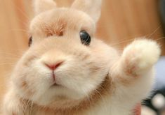 So Cute Baby, Cute Baby Bunnies, Cute Babies, Hunny Bunny, Cute Little Animals, Cute Funny Animals, Funny Dogs, Cute Bunny Pictures, Funny Rabbit