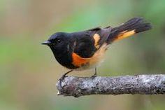 birds - Google'da Ara