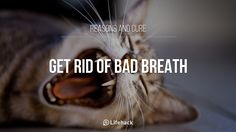 Get Rid of Bad Breath: Day 5