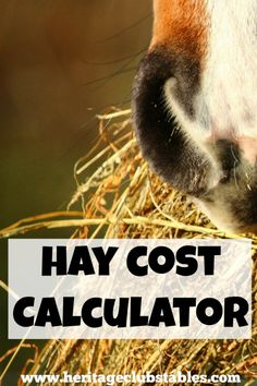 Use this FREE hay cost calculator to find out how much it will cost you to feed your horse for the year. Get a handle on how much it can and will cost.