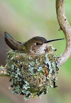 Humming Bird Nest: Karen Crowe.
