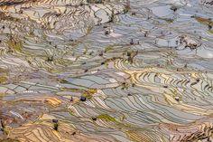 Dit is het derde natuurwonder van mijn miniserie 'bijzondere landschappen in Yunnan'. Na 'de rode aarde' en 'het karstgebergte' nu aandacht voor de meest spectaculaire rijstterrassen van China. Veel van de terrassen zijn al meer dan duizend... - Yunnan, China | Columbus Travel