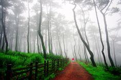 산림문화작품공모전 입선/박영서(안개속으로) ※ 본 저작물의 무단전제 및 재배포를 금합니다. copyright ⓒ 2013 by 산림청(Korea Forest Service) All pictures can not be copied without permission.