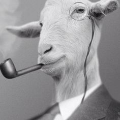 As I mentioned previously, goats are sophisticated. Sometimes they smoke pipes and wear monocles as a manifestation of said sophistication.