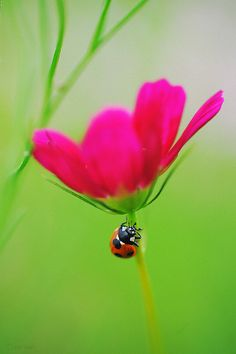 My favorite, pink and green! The little ladybug is an added bonus. :)