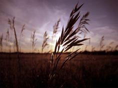 sunset-photography3