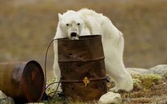 Despite heart-wrenching real life stories like this one, greedy politicians still want to drill in the Arctic. A petition on Care2 has been set up to provide an outlet for people to contact their C…