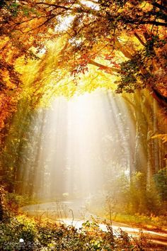 Sometimes the world is just full of enchantment and abundant light...bask in it...