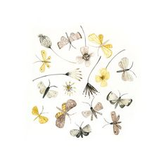 Moths and Flowers by Katie Wilson of inmybackyard