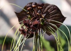 Orchideen Fotos - Fehler bei der Pflege von Orchideen