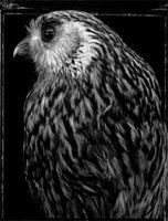 Fiona Pardington New Zealand Art, Master Of Fine Arts, Still Life Photographers, Owls, Birds, School, Artist, Pictures, Photography