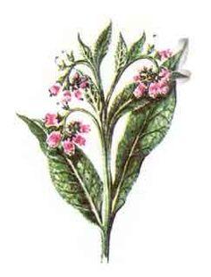 tataneasa Garden Trees, Medical, Plants, Shake, Health, Remedies, Gardens, Fashion, Moda