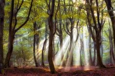 Komorebi: When sunlight shines through trees | AWA Tree Blog.