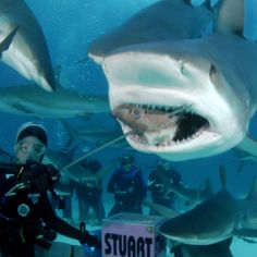 Bahamas.  Scuba diving with the sharks is a must do. It would be thrilling!