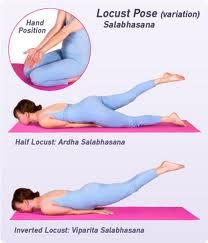 locust pose - for erector spinae muscles