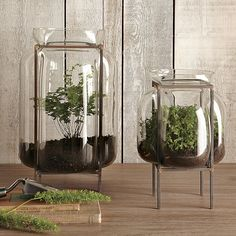Glass Terrarium With Metal Stand, Extra Large 18X12