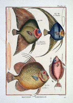 Fishes of the 18th century by Liliana Ciari Naldini, Florence Prints. ~via wapiti3, Flickr