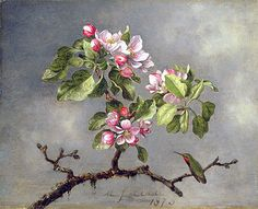 Apple Blossom Painting Apple blossoms and a