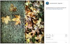 Outono How To Dry Basil, Instagram, Fair Grounds, Autumn, Fotografia