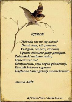 Kurdish temps, Kurdistan, Kurds; AHMET ARIF