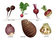 root-vegetables_2.jpg (550×384)