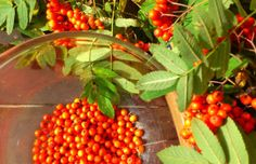 Autumn, Vegetables, Food, Juice, Fall Season, Essen, Fall, Vegetable Recipes, Meals