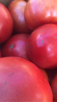 Calling all Canners!!! Farmer Joe says there's plenty of tomatoes ready for canning. Just give us a call @850-691-0528 and we'll be sure to set some aside for you. Don't delay - you never know how long this plethora of tomatoes will last. #smithsacresniantic #tomatoes #canning Just Giving, Will Smith, Tomatoes, Farmer, Wellness, Canning, Vegetables, Farmers, Vegetable Recipes
