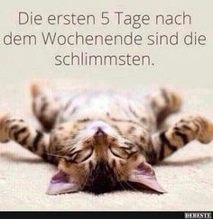 The first 5 days after the weekend are the worst funny pictures - Freitag Wochenende - Humor Kittens Cutest, Cats And Kittens, Cute Cats, Funny Cats, Animals And Pets, Funny Animals, Cute Animals, Funny Shit, Funny Jokes