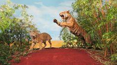 Diarama Miniatures, Animals, Dioramas, Museums, Culture, Taxidermy, Animales, Animaux, Miniature