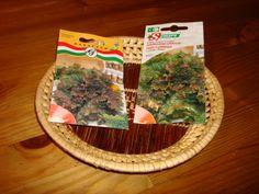 Garden Projects, Plants, Anna, Gardening, Bread, Blog, Terracotta, Garten, Planters