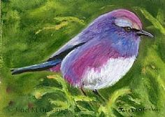 Art: White Browed Tit Warbler ACEO by Artist Janet M Graham