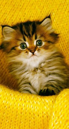 Kittens And Puppies, Cute Cats And Kittens, Baby Cats, Kittens Cutest, Beautiful Kittens, Kitten Love, Crazy Cat Lady, Cute Baby Animals, Make Me Smile
