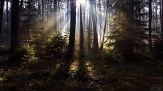 Forest, amazing quality photos for the background on your desktop.