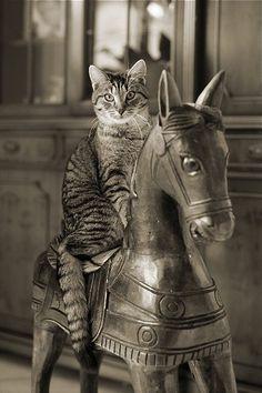The Cat photo. Animal Gato, Mundo Animal, Crazy Cat Lady, Crazy Cats, I Love Cats, Cool Cats, Gatos Cats, Photo Chat, Tier Fotos
