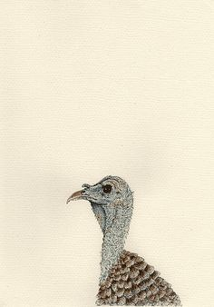 Meleagris gallopavo (2016) Pen & Watercolour with gloss finish 210mm x 297mm by Anna Vialle Print £30.00
