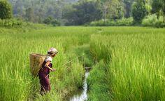 """Varios estudios señalan la necesidad de abordar las políticas climáticas desde una perspectiva de género ya que el cambio climático afecta de forma diferente a hombres y mujeres""""Por ejemplo, la sequía implica que mujeres y niñas, encargadas de la recolección de agua, tendrán que caminar largas distancias"""", explica la investigadora Janna Tenzing a eldiario.es""""El número de hambrientos podría reducirse en más de 100 millones de personas si se diese a las mujeres rurales el mismo acceso a los…"""
