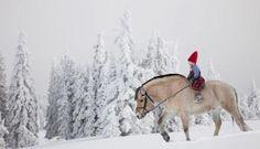 Horse Ride in Lapland