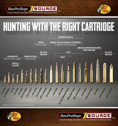 Rifles calibers for hunting animals
